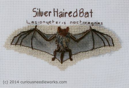 Embroidered silver-haired bat