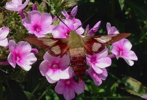Moth 1