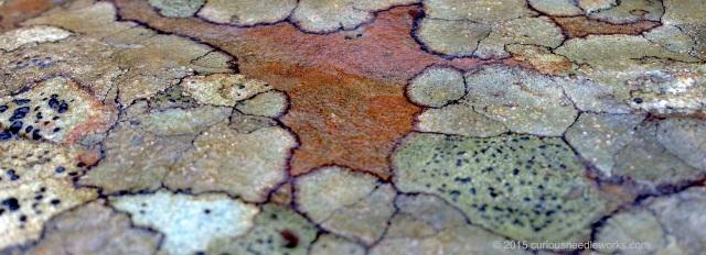 asheville lichen