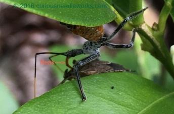 bugvbug 2