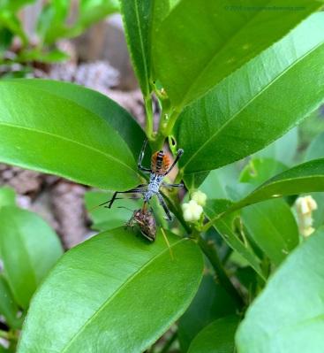 bugvbug